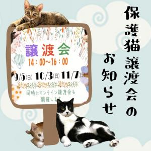 10月3日(日) 保護ねこの家譲渡会開催のお知らせ!!