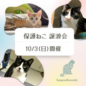 参加ねこ紹介【1】10月3日開催~保護猫譲渡会~