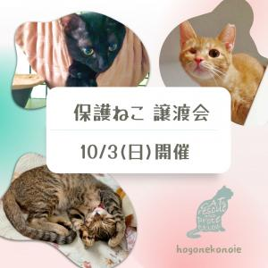 参加ねこ紹介【2】10月3日開催~保護猫譲渡会~