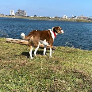 人のいない運動公園で犬は思いっきり走るかと思ったが・・・