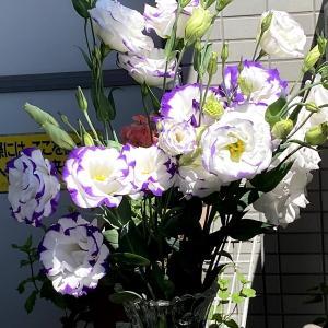 お花。お花。お花。