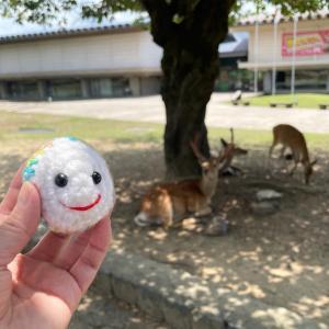 【おたまじゃくしトラベル】奈良公園へお出かけしたよ
