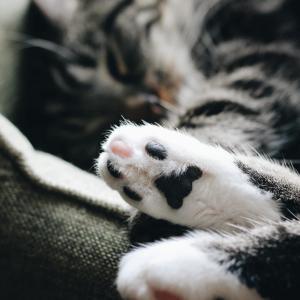 猫がご飯を食べない?元気がない?強制給餌の方法や便利アイテムまとめ