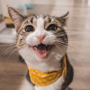 【高カロリー食まとめ2】腎臓病の老猫。療法食より、まずはカロリー重視