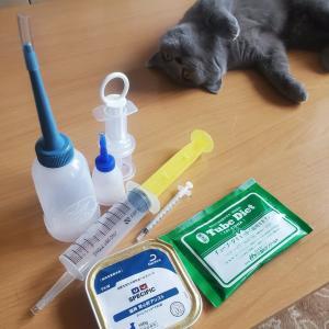 猫の強制給餌に最適なシリンジはどれ?経験者のおすすめサイズと工夫を口コミ。