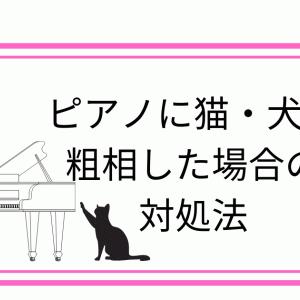 ピアノに猫や犬が粗相(おしっこ)をしてしまった!費用や対策を調律師さんに聞いてみた。