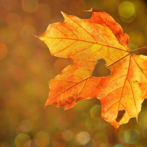 簡単!季節や自然を感じながら楽しめるおすすめの工作