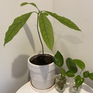 植物好きにおすすめ!ターゲットとマイケルズの春を感じる可愛いアイテム
