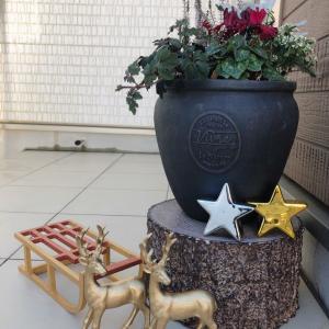 京成バラ園で買ってきた苗達とクリスマス雑貨を飾ってみたよ!
