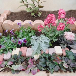 表花壇の土壌改良して買ってきた苗を植え付けたりしたよ!