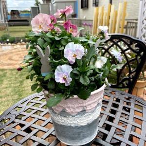 春のお花の種まきしました♪自家採取の種は果たして…