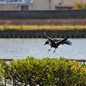 鳥(なにわ自転車道)
