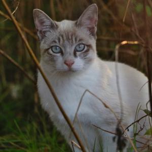 野良猫と見つめ合う