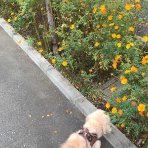 今日のココタロさん散歩。