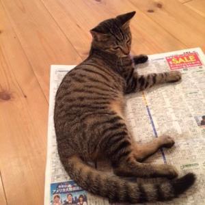 あんこは、新聞紙とか紙が大好き