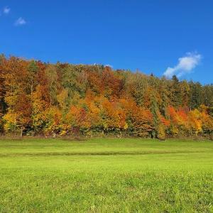 晩秋のスイス 今年の紅葉は美しい!