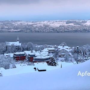 公共交通は止まり、倒木注意!今年のチューリッヒの大雪