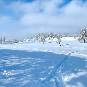 辺り一面銀世界、雪に覆われたパノラマの散歩道