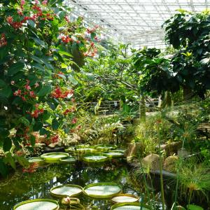 神代植物公園が再開!広々と綺麗な空気でマイクロツーリズム