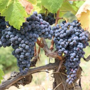 「徹底解説」フランスのワインのお話 (10のフランスの名産地)