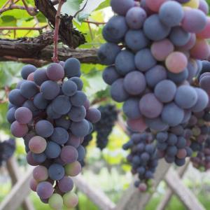 「ワイン初心者必見」美味しいワインの選び方。