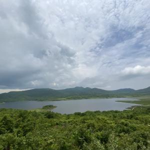 雄国沼湿原では十数年ぶりのコバンケイソウ群生が花盛り