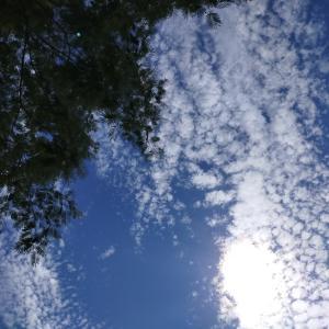 最近とても空がキレイ
