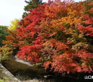 石柱渓の紅葉