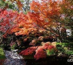 芳松庵の紅葉