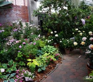 世界を旅する植物館のばら