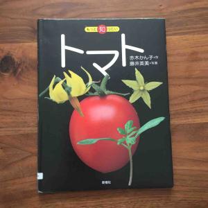 種からトマトを育て始めました〜「 トマト(もっと知りたい)」
