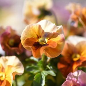 花粉症の季節がやってきた