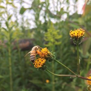 最近撮った蜂の写真