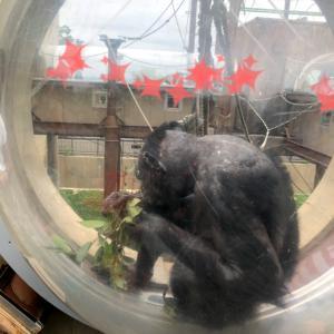 旭山動物園で過ごした1日