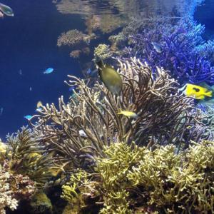 熱帯魚おすすめの餌!飼育者必見!