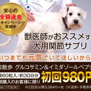 獣医師推奨の犬用関節サプリ! 筋肉成分と軟骨成分配合「毎日散歩」