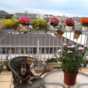 秋の花とシニアの犬と