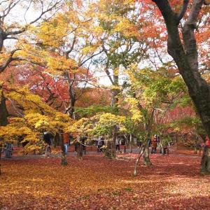 紅葉の京都③