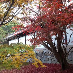 紅葉の京都4④