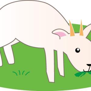 草刈りは大変だけど強い味方がおりまするよ🌿ヽ(*^ω^*)ノ それはヤギ様っ🐐🌟