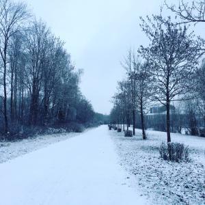 一日にして雪景色!ドイツの冬は厳しいけど綺麗です。