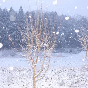 ドイツ!雪の日の過ごし方は?ここ数日雪がすごいです!