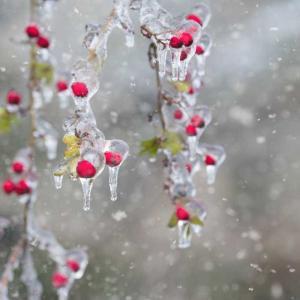 冬の後には 春が来る Delightful Spring comes after Coldest Winter