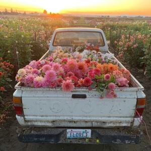 アメリカの花卉農家 From Instagram お花仕事の部屋