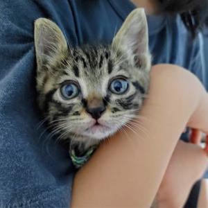子猫の名前を考える