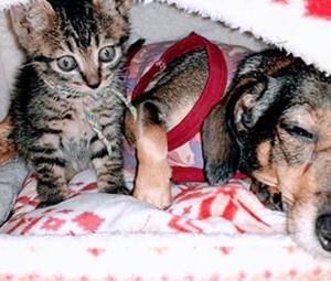 【キトンブルー】子猫は黒目が小さい?いつもビックリ顔のとら松