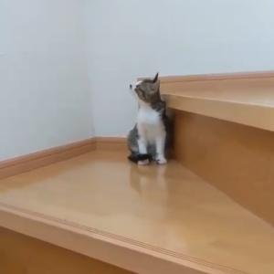 初めて階段のぼったよ😊