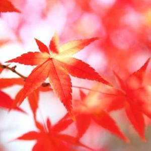 薄商いのなか続伸した 2020年10月6日 日本相場