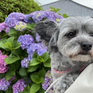 愛犬と兵庫県小野市の浄土寺に行ってきました。