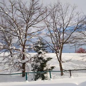日本の「雪」を古語にしない!美しい風景も言葉も残りますように
